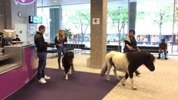 Tilburger protesteert met pony's in gemeentehuis Tilburg  tegen sloop ponystal