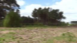 Slapen tussen de leeuwen, giraffen en zebra's:  Beekse Bergen bouwt aan nieuw vakantiepark