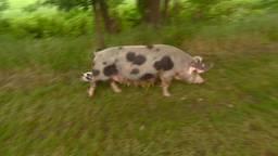 Peter Wijnen uit Heusden staat op de lijste van vijfsterren-varkensboeren