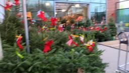 Het mag weer, met de Sint weer het land uit, mag de kerstboom naar binnen