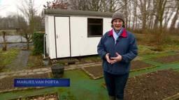 Groente verbouwen loopt uit de hand in Zevenbergen: gemeente wil 40 schuren bij moestuin weg