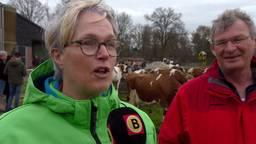 De koeien mogen de wei weer in!