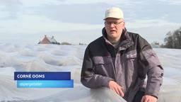 Aspergeboeren vinden de bezwaren van GroenLinks tegen landbouwplastic overdreven