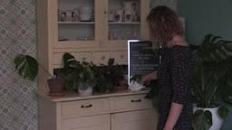 Plantenasiel Eindhoven lapt lelijke en bijna dode planten weer op