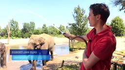 Waterpret met olifanten en ijsjes voor de chimpansees