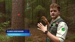 Flinke bomenkap Mastbos Breda is nodig voor het voortbestaan van het bos