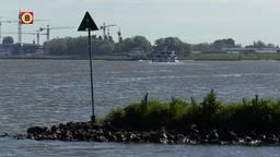 Voor onderzoek zwemmen zalmen met een zender in hun buik in onze rivieren