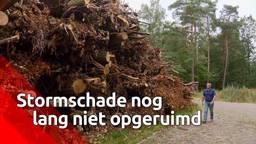 In Eindhoven en omgeving zijn begin juni, tijdens een korte maar hevige storm, een kleine tweeduizend bomen gesneuveld. De totale schadepost voor negen gemeenten bedraagt zeker 1,5 miljoen euro.