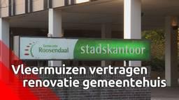 Twee vleermuizen leveren vertraging op voor de verbouwing van het stadskantoor in Roosendaal