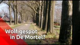Heeft Harm in december de eerste wolf in Brabant sinds tijden gespot? 'Het heeft er alle schijn van'