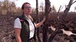 Boswachter Lieke loopt door de afgebrande Peel: 'Over een paar weken is het weer een beetje groen'