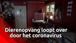 Deze dierenopvang in Nispen loopt over door toedoen van het coronavirus