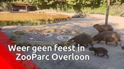 Weer geen feestje voor 'pechpark' Overloon