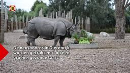 De neushoorns in Dierenrijk vierden feest