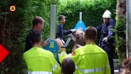 De kameel werd door de hulpdiensten omhoog getakeld