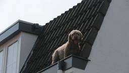 Hond met hoogwerker uit dakgoot gered in Eindhoven
