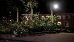 Omgevallen bomen en afgewaaide takken door zomerstorm Francis
