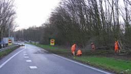 Omgewaaide bomen in de hele provincie, afrit Den Bosch Maaspoort (A59) nog uren dicht.