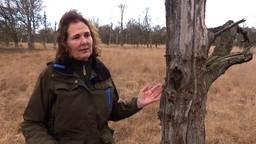 Boswachter Irma de Potter over stikstofschade aan de natuur