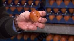 Gerookte eieren uit Brabant moeten Europa veroveren