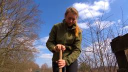 Efteling-medewerkers helpen een handje in de bossen nu park gesloten blijft