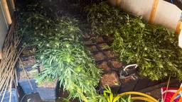 Ondergrondse hennepkwekerij gevonden in bos bij woonwagenkamp in Best