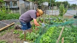 Joachim is bang dat zijn groenten anderen ziek maken: 'Geef ze altijd weg'