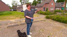 Hondenbaasjes in wijk Deurne-Zeilberg bezorgd om vele grasaren