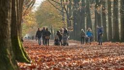 Drukte in het Mastbos in Breda (foto: Tom van der Put/SQ Vision)