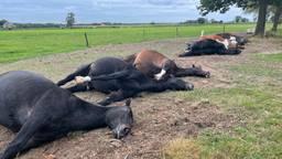 7 paarden dood door blikseminslag in Maarheeze, eigenaren in tranen