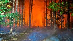 Zeker 2500 vierkante meter bos bij Valkenswaard zou in de as zijn gelegd (foto: Rico Vogels/SQ Vision).
