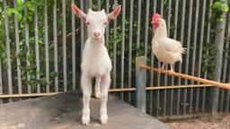 Lars en Coco zijn dikke vrienden (foto: De Doornakker).