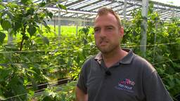 Maarten teelt frambozen onder zonnepanelen in plaats van plastic