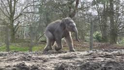 Rashmi loopt als een dartel veulen in de buitenlucht (foto: Dierenrijk).