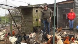 Haantjes massaal gedumpt in Altena, opvang van de dierenambulance zit bomvol (foto: Omroep Brabant).