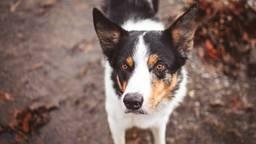 Dit is niet hond Max (foto ter illustratie: Brixiv/Pexels).