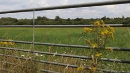 Het Leegveld verandert van agrarisch gebied in een natuurgebied.