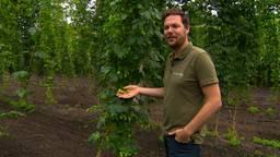 Giel is dol op speciaalbier en verbouwt nu hop voor Brabantse brouwerijen