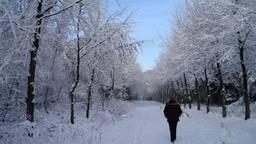 De sneeuw zou voor extra drukke gipskamers kunnen zorgen (archieffoto: Henk Voermans).