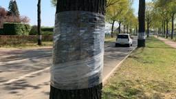 De boomstammen worden in plastic folie gerold.