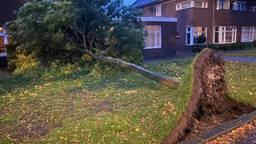 Bomen omgewaaid door harde wind