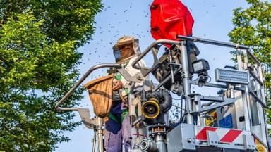 Met een hoogwerker kon de imker bij het nest komen (foto: Jack Brekelmans/SQ Vision Mediaprodukties)