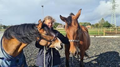 Na vreselijk drama heeft Sanne weer twee nieuwe pony's