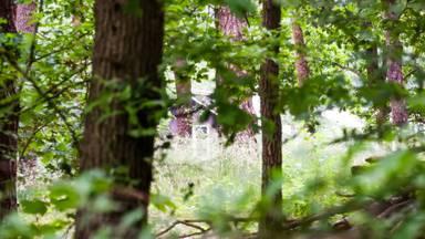Het huis van de man ligt verscholen in de bossen (foto: Dave Hendriks/SQ Vision Mediaprodukties).