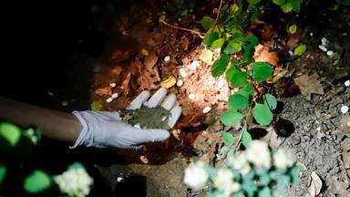 Er lagen grote hoeveelheden medicijnen in de struiken in Cuijk (foto: SK-Media).