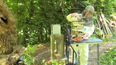 Insecten helpen bij strijd tegen eikenprocessierups