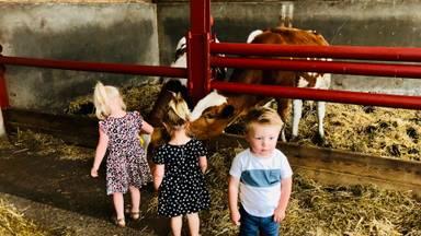 Kinderen spelen tussen de koeien op het agrarisch kinderdagverblijf