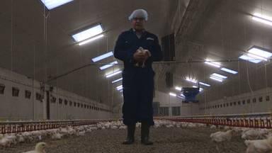 Honderdduizenden eieren en bergen mest kunnen eindelijk worden afgevoerd