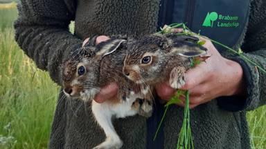 Ruim honderd vrijwilligers gingen op zoek naar dieren in het gras.