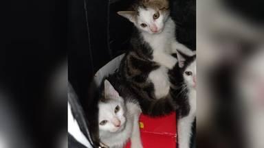 Drie kleine katertjes zaten in een rugzak (foto: Dierenasiel De Doornakker)